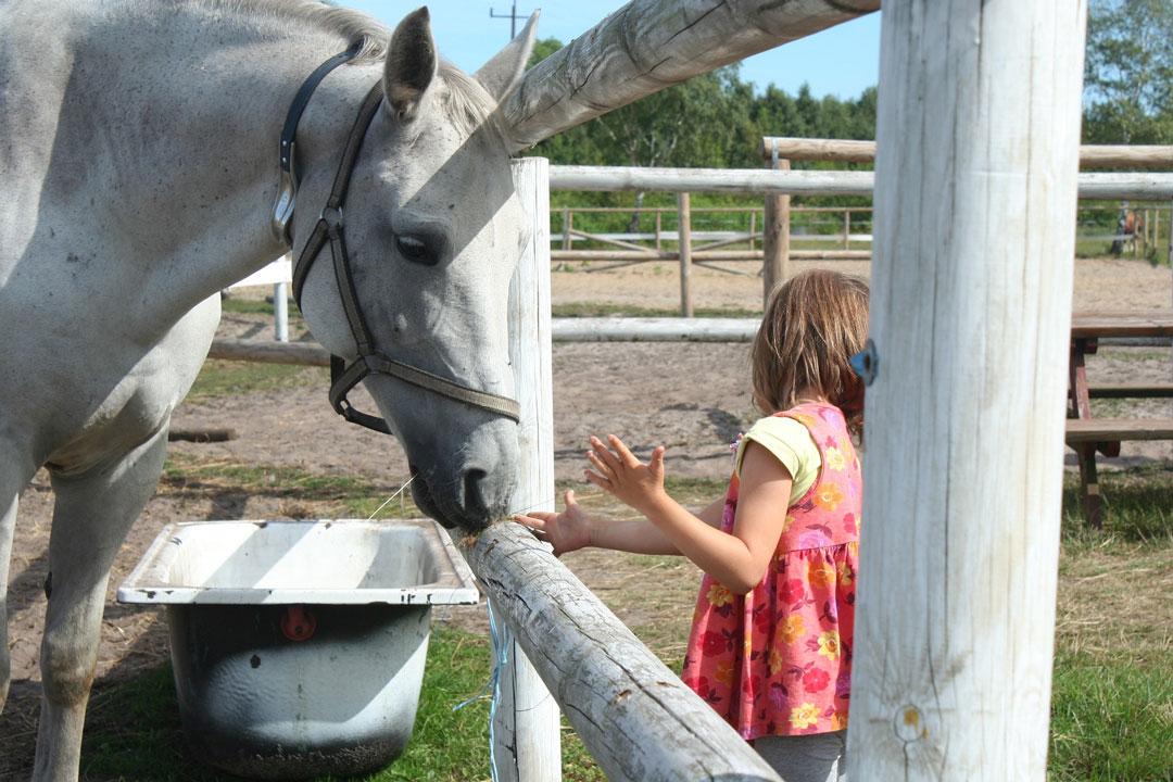 Kind mit Pferd auf der Koppel