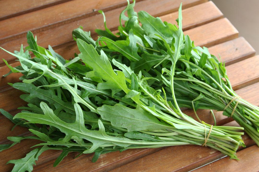 Rucolaist ein würziges und aromatisches Kraut welches hervorragend zur Verarbeitung von verschiedenen Wintersalaten geeignet ist.