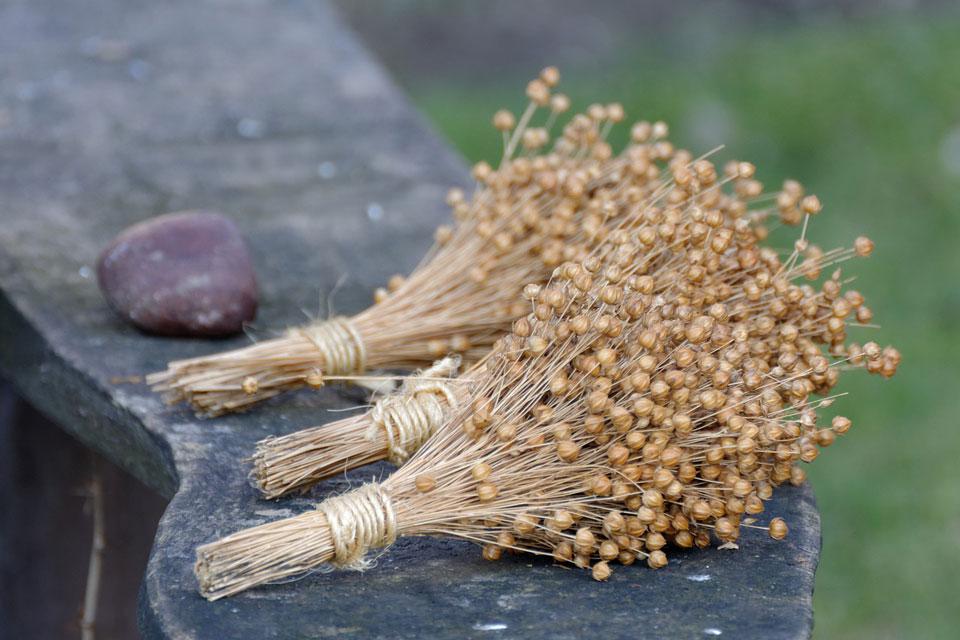 Der Lein oder Flachs ist eine Pflanze, die den Menschen seit uralten Zeiten begleitet.