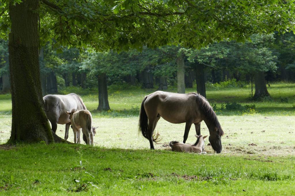 Auf der Pferdekoppel einer Freundin kamen unsere Pferde unter.