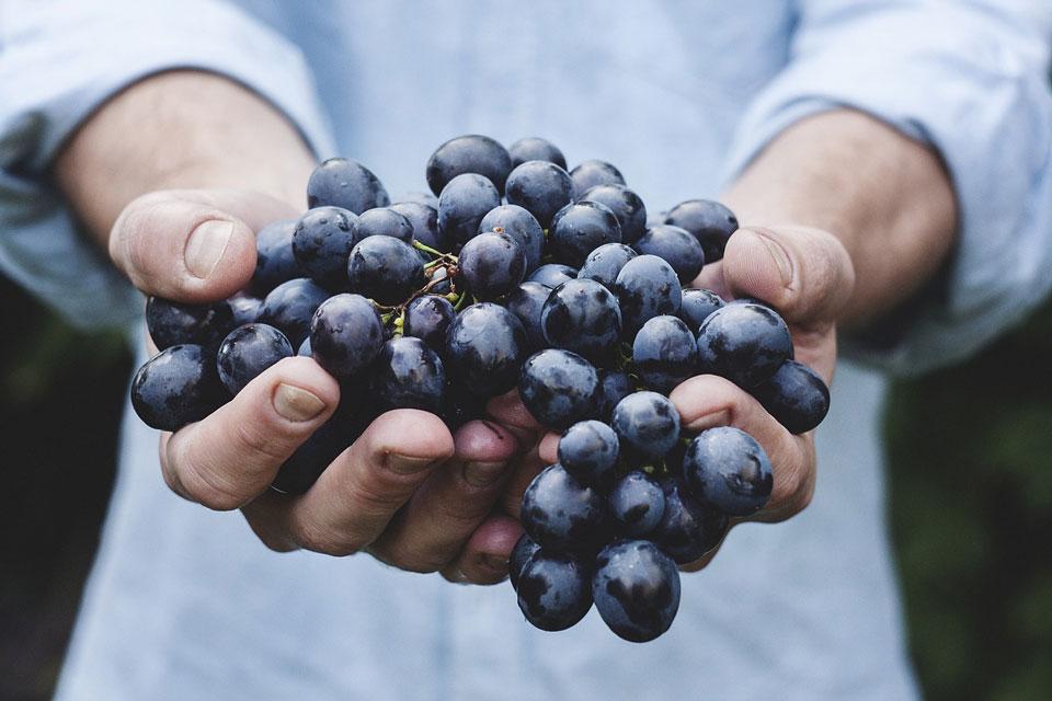 Wer regional kauft, kauft oft bewusster und gesünder ein. Es herrscht mehr Vertrauen in die Qualität der Lebensmittel, die wieder als solche gesehen und wertgeschätzt werden.