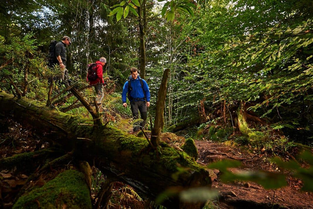 Drei Personen laufen im dichten Wald