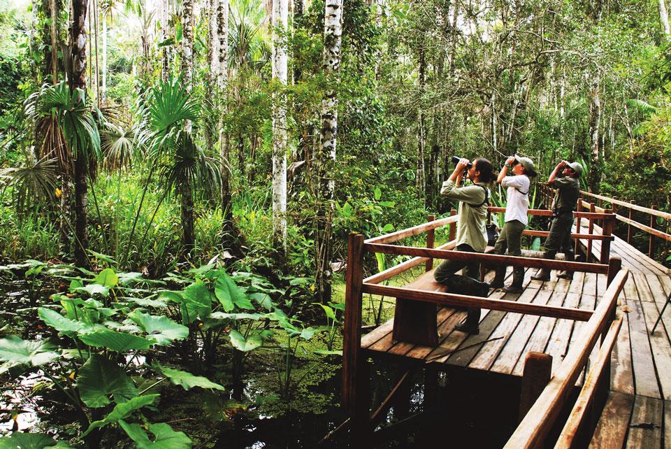 Auf der Exkursion im Wald wird die Vielfalt des Regenwaldes deutlich.