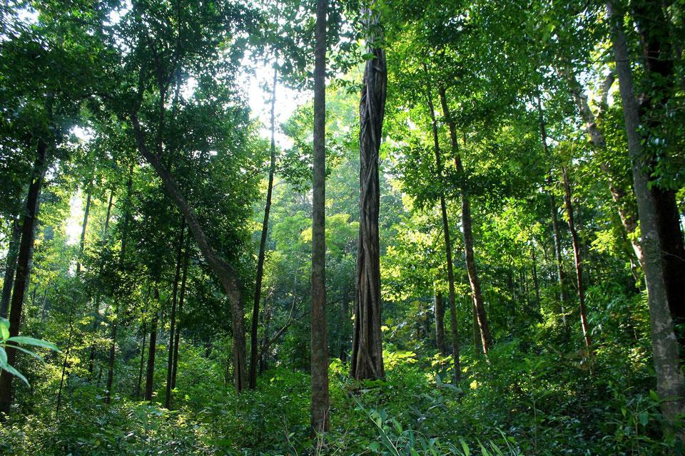 Wald rund ums Wild Mahseer