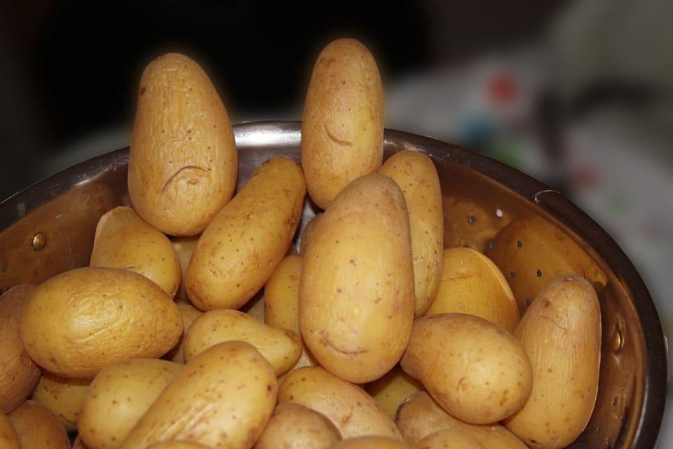 Gekochte Kartoffeln im Sieb
