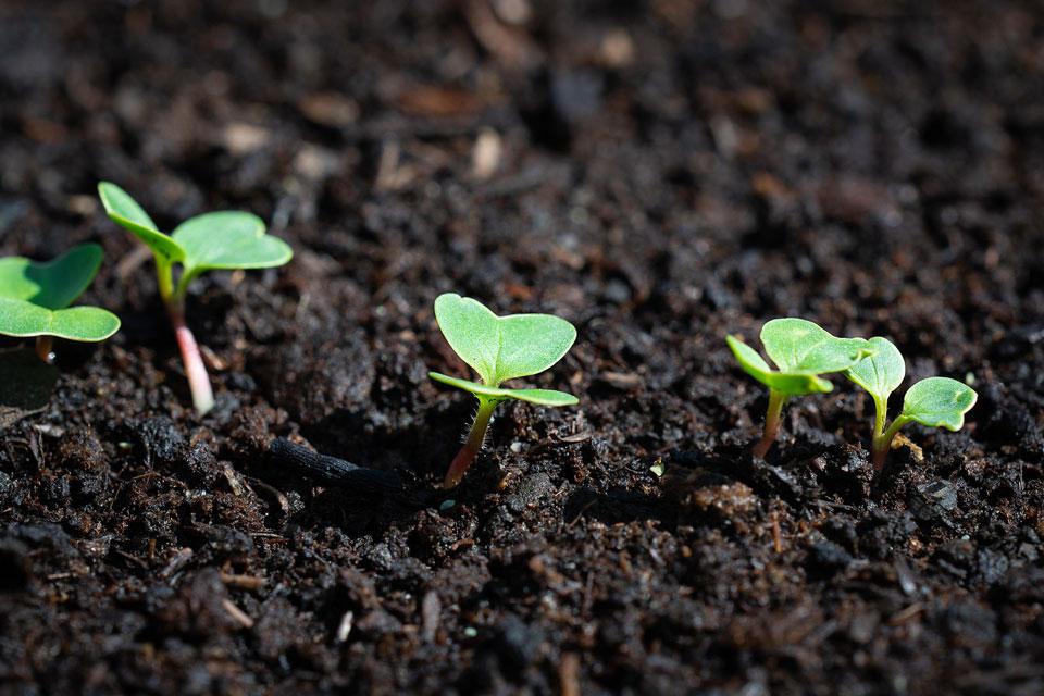 Jungpflanzen in einem Gartenbeet