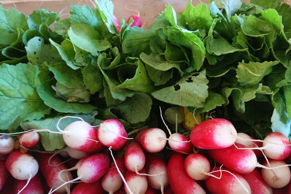 Verschiedene Radies-Sorten auf dem Gemüsemarkt
