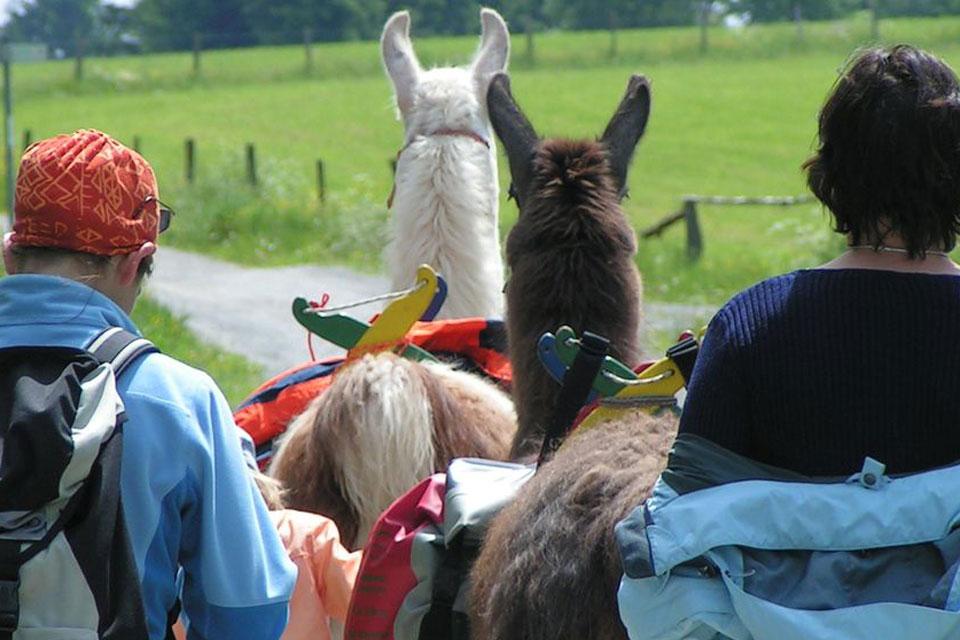 Wandern oder Trekking mit Lamas als tierische Begleitern.