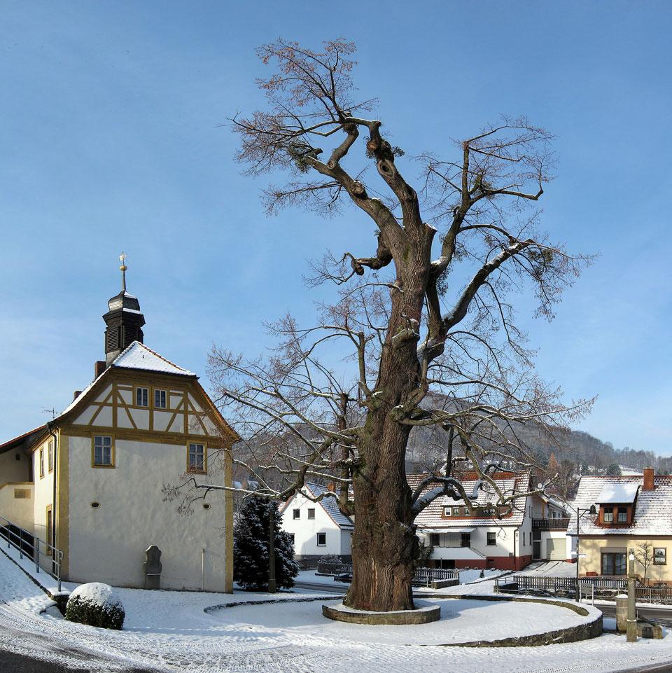 Eine Linde steht in der Mitte des Dorfes