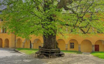 Ein Lindenbaum steht in einem Hof
