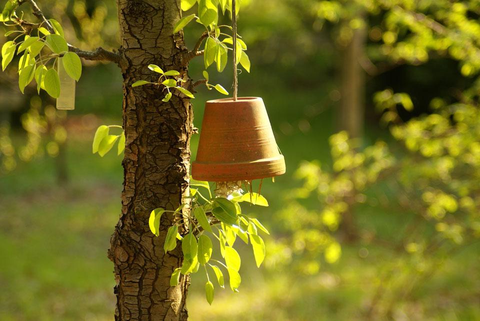 Ein am Baum umgekehrt aufgehängter Tontopf bietet ein Rückzugort für Nützlinge