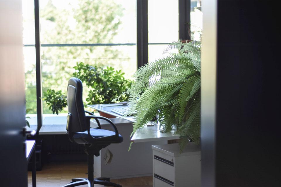Ein Büro mit Pflanzen die dem Sick Building Syndrom entgegenwirken