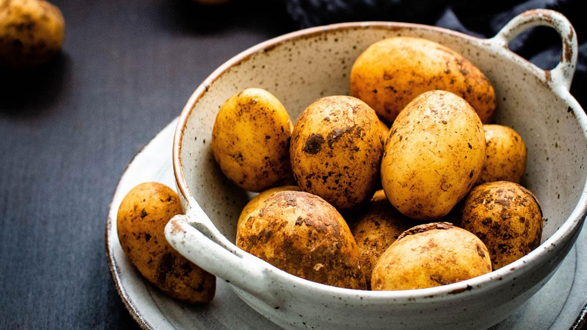 Frisch geerntete Kartoffel in einer Schale