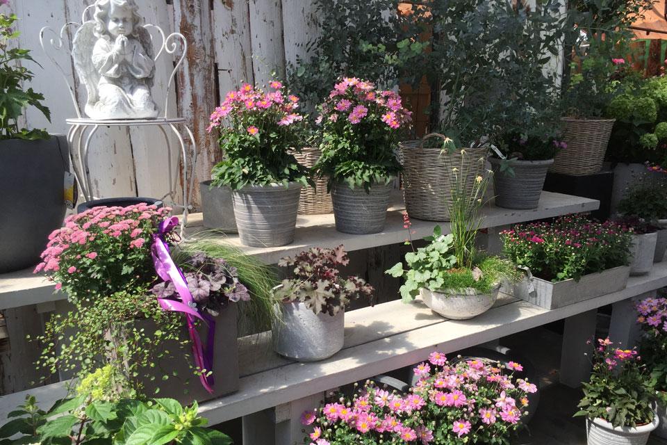 Eine Auswahl von Pflanzenschalen herbstlich dekoriert