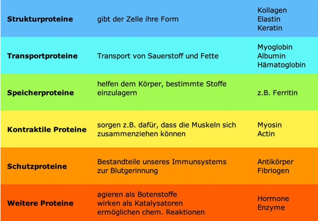 Eiweiß-Tabelle mit Aufteilung der Proteine nach ihrer Aufgabe mit einigen Beispielen