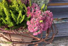 Herbstliches Blumenarrangement mit Besenheide