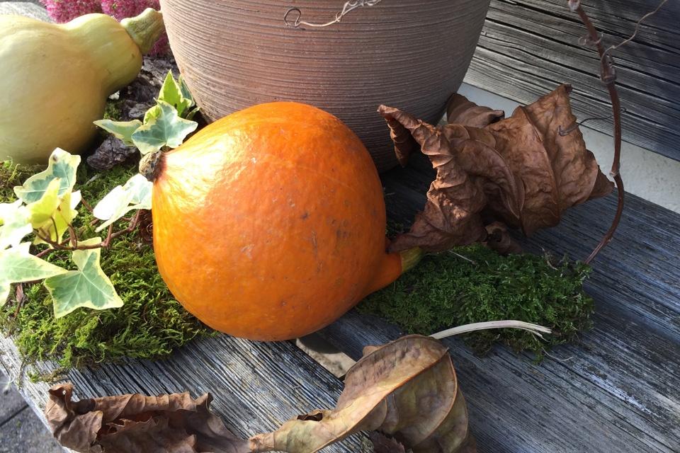 Herbstliches Arrangement mit Calluna (Besenheide), rundherum dekoriert Moos und verschiedenen Dekorations-Materalien.