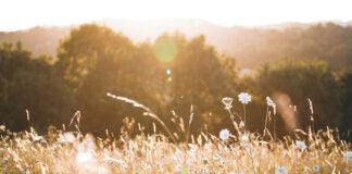 Eine Blumenwiese für Herzerwärmer und Kraft zu tanken