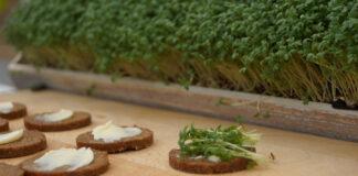 Schwarzbrot mit Kressen als natürliche Mienarstoffe