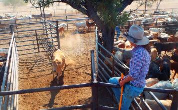 Stephie sitzt nach der Arbeitslosigkeit im Australischen Outback auf einem Zaun