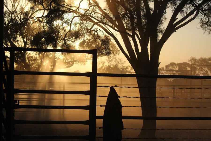 Sonnenuntergang auf der Farm in Australien