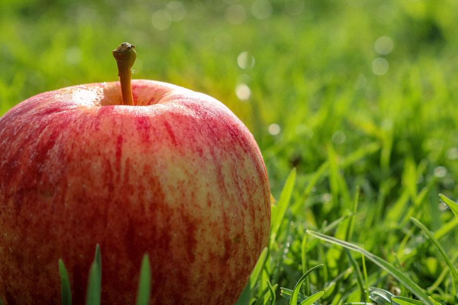 Ein reifer Apfel liegt im Gras und gilt als Superfood