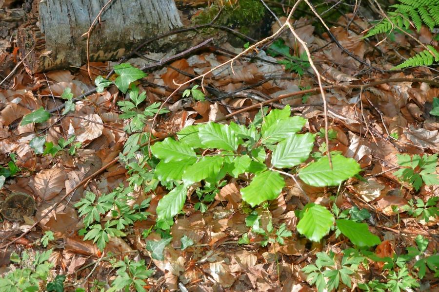 Junge Pflanze im Wald