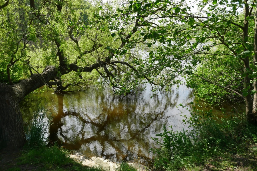 Bewachsenes Ufer im Nationalpark