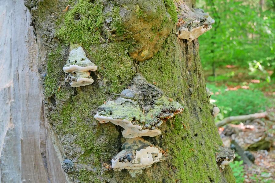Ein mit Pilzen bewachsener Baum