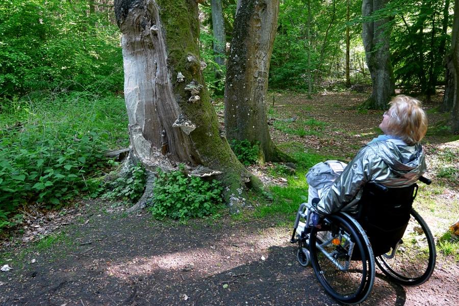 Frau im Rollstuhl betrachtet einen Baum